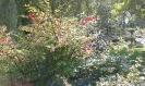Arboretum i  kl III